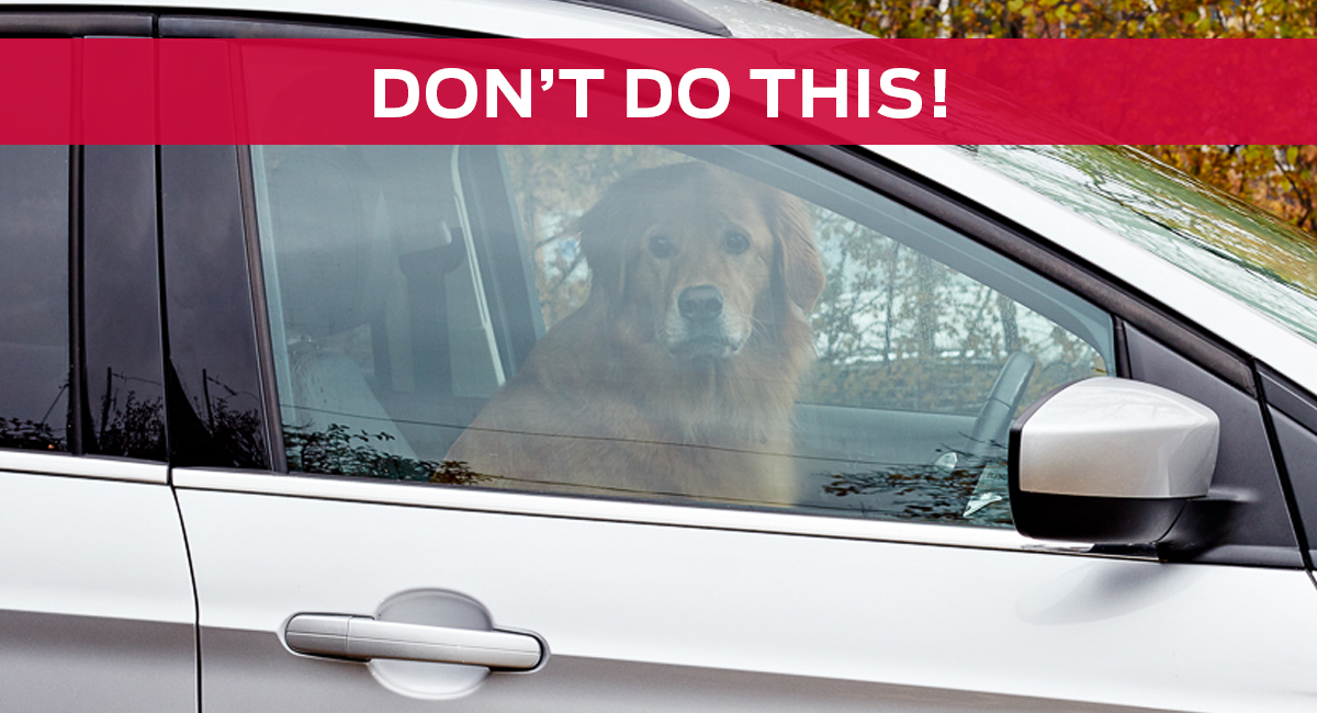 For your pet's safety, don't leave your dog alone in a car.