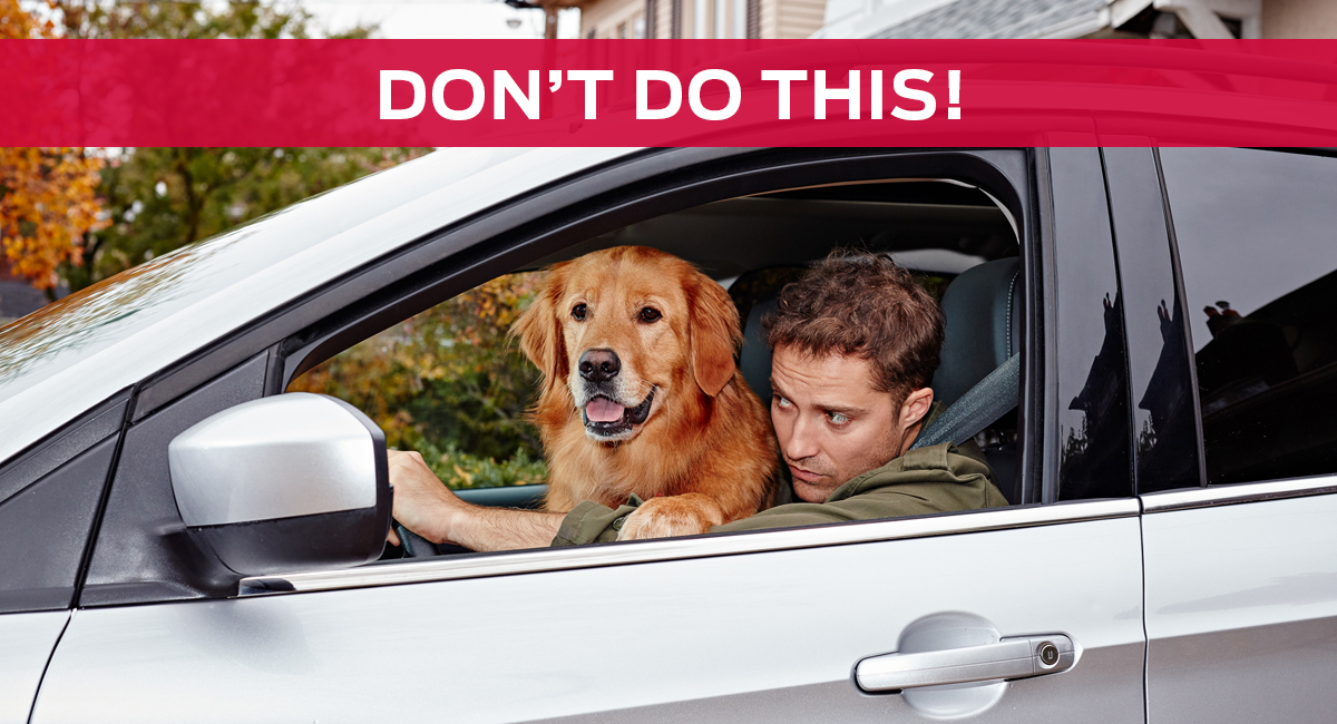 Don't let your dog ramble around a automobile when we drive. This is vulnerable and can harm we and your pet.